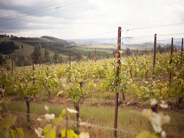Soter Vineyards (photo by Chris Serra)